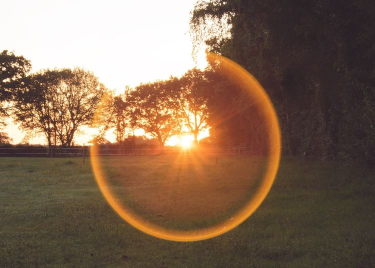 Tree Nature Sun Beauty In Nature Sunrise Corona Sunburst Circle Circle Of Light Morning Morning Light Rural Scene Countryside Sunlight Tranquil Scene Field Tranquility Scenics No People Landscape Outdoors Grass Day Sky