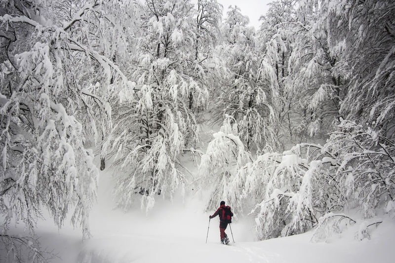 ski touring man into a snowy forest on winter wearing a red jacket Adventure Healthy Lifestyle Randonnée Ski Ski Holiday Ski Touring Snow Shoeing Snowy Forest Travel Travel Destinations Water White Color Winter Winter Sport