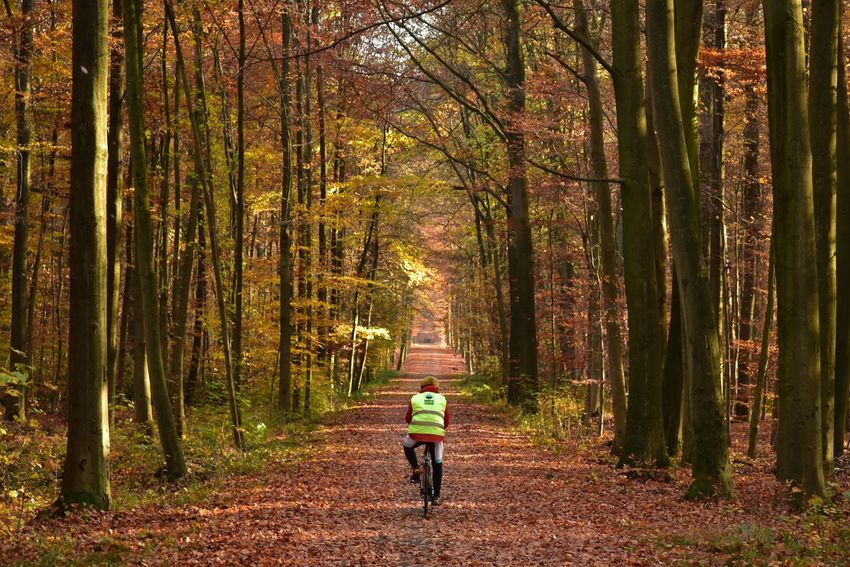 Autumn colors Sonian Forest Orange Color Lush Foliage Idyllic Forest Tree Plant Rear View Land Full Length Nature Beauty In Nature Leisure Activity The Way Forward WoodLand One Person Transportation Direction Walking Tranquility Growth Environment Activity Lifestyles