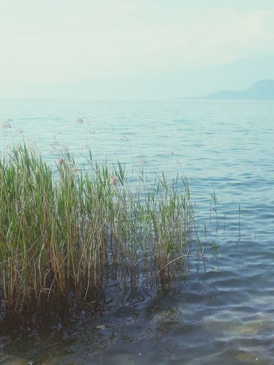 Lake Green Blue Silence ♥