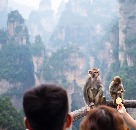 Monkeys sitting on railing against mountains