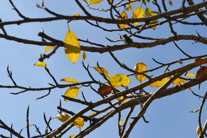 Autumn🍁🍁🍁 Tree_collection  Tomsk Region,