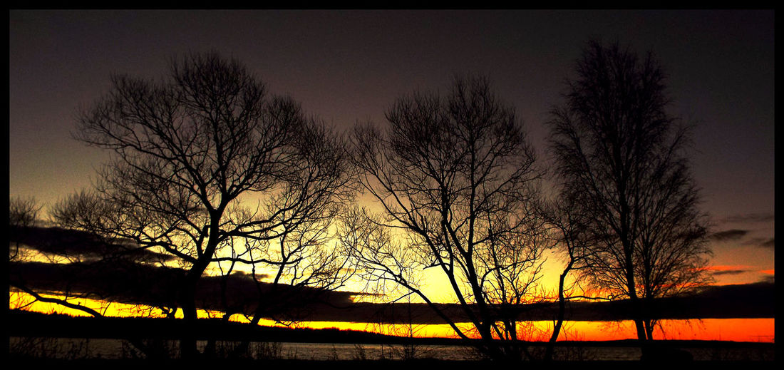 Silhouette of bare trees at sunset