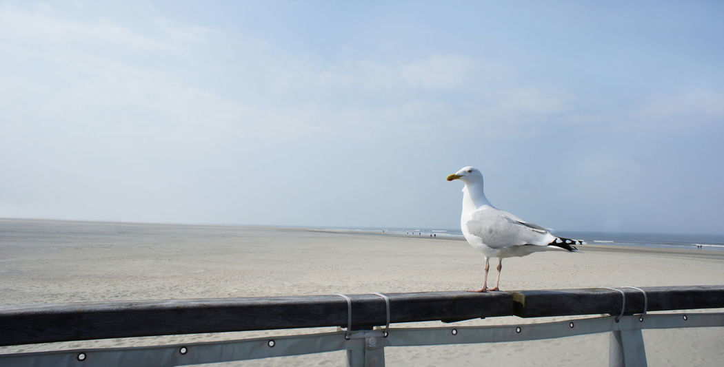 seagull at the beach Norderney Animal Themes Beach Bird Day Escapism Germany Getting Away From It All Möwe Nature Norderney One Animal Outdoors Sea Seagull Seemöwe Shore Strand Urlaub Vacations Vogel Wildlife