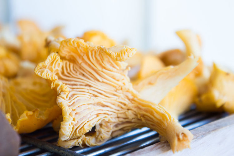 Autumn Golden September Chanterelles Close-up Edible Mushroom Focus On Foreground Food Freshness From The Woods Golden Chanterelle Healthy Eating Indoors  Kitchen Utensil Mushroom No People Plate Seafood Selective Focus Vegetable Wellbeing