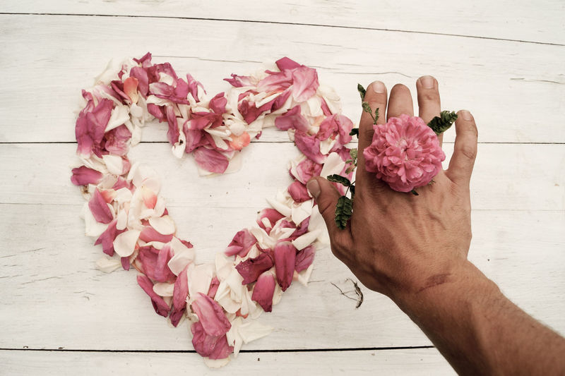 Close-up of hand holding pink roses on table