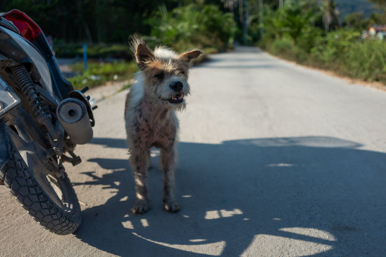 Koh Lipe Domestic Animals Mammal Domestic Pets One Animal Transportation Dog Canine Animal Animal Themes Road Looking At Camera Sunlight Portrait City Shadow Street Vertebrate Day Focus On Foreground No People Outdoors Animal Head