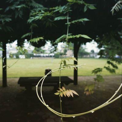 Japan Miyazaki Miyakonojo Park Nature Trees Green Lvy Pic 宮崎 部活