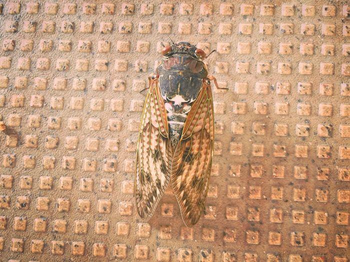 Cicada Summer 蝉