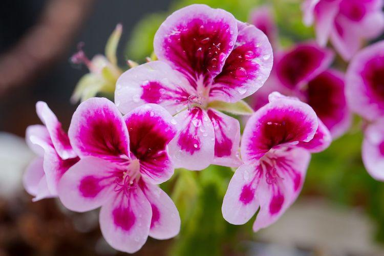 Flowers Eye Em Nature Lover Rain Macro
