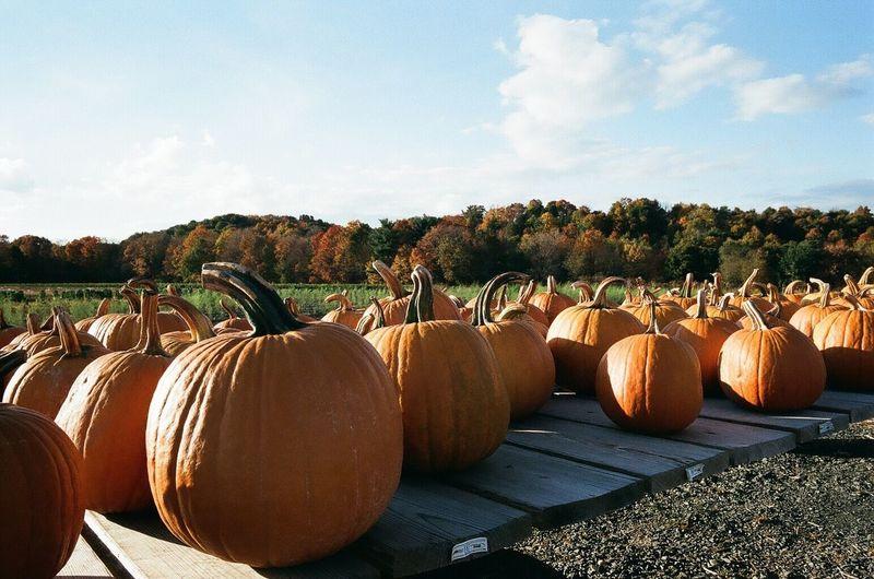 Mmmmmm pumpkins