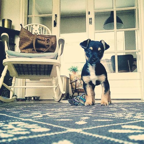 Dogs Puppy PuppyLove Friend Dogfriend Cute Pets Wolf Frenchbulldog Jackrussell