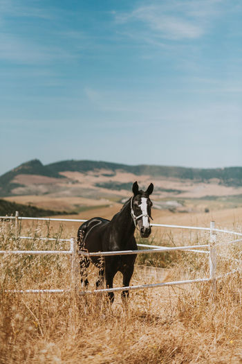 Horse standing on grassy field against sky during sunny day