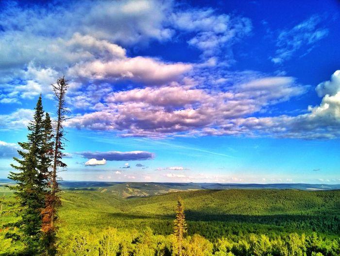 Forest Siberia Nature Siberia Nature