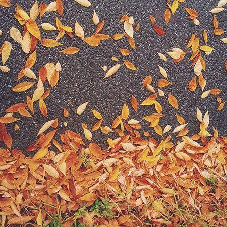 가을 비 낙엽