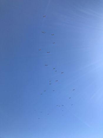 Leylek Stork Storks