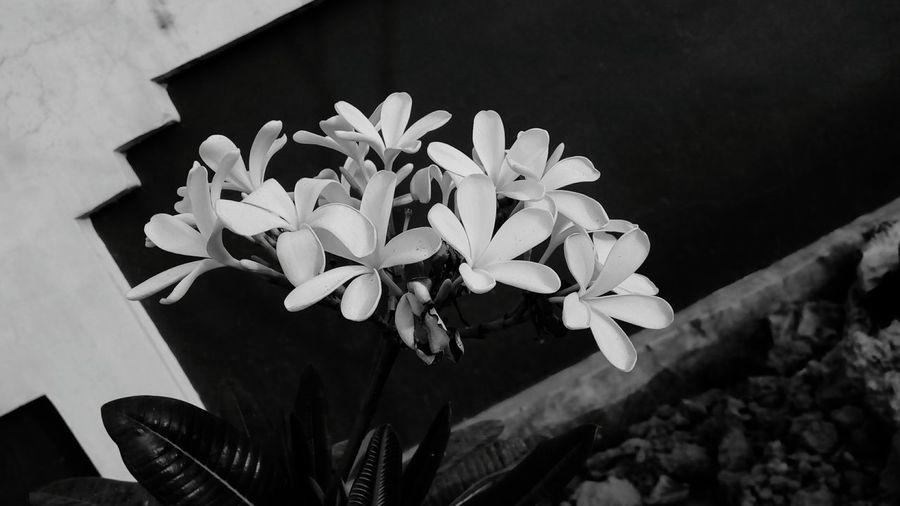 Flower Plant No