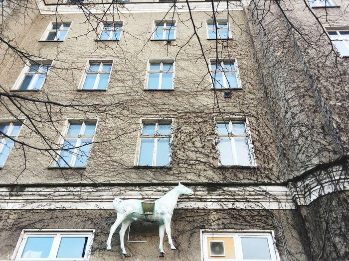 Horse Chagall