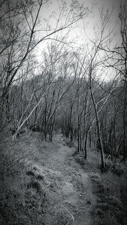 Into The Woods Hidden Path Blackandwhite Horror In Nature Colli Euganei
