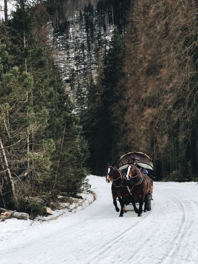 Horse cart on snow covered road