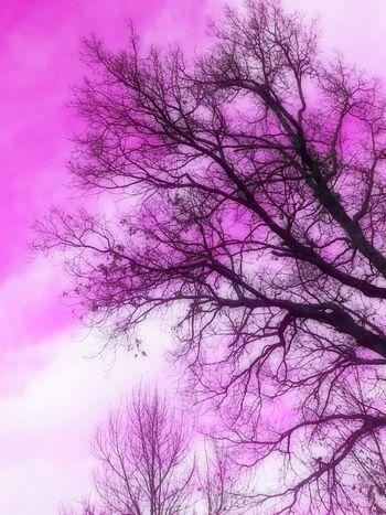 Sky Pink Sky Itsapinkworld