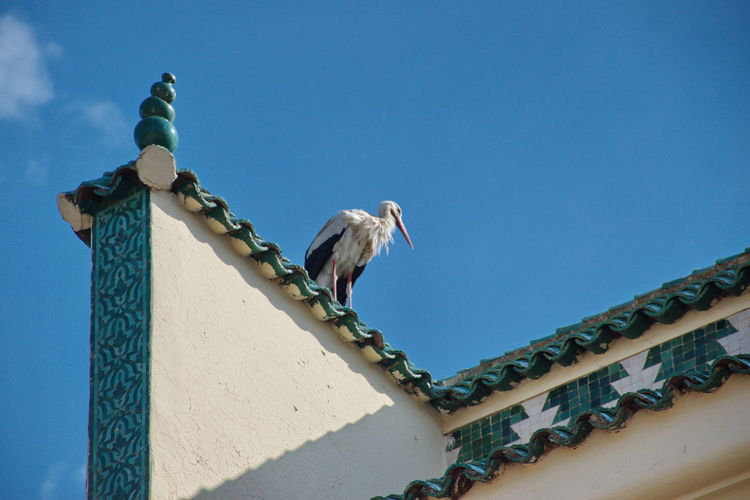 Low angle view of stork perching on roof against blue sky