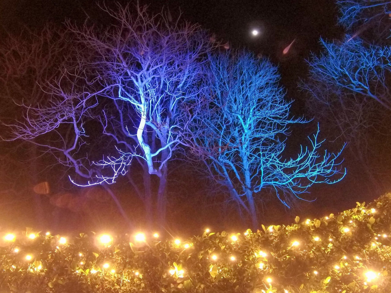 FIREWORK DISPLAY OVER ILLUMINATED TREES AGAINST SKY AT NIGHT