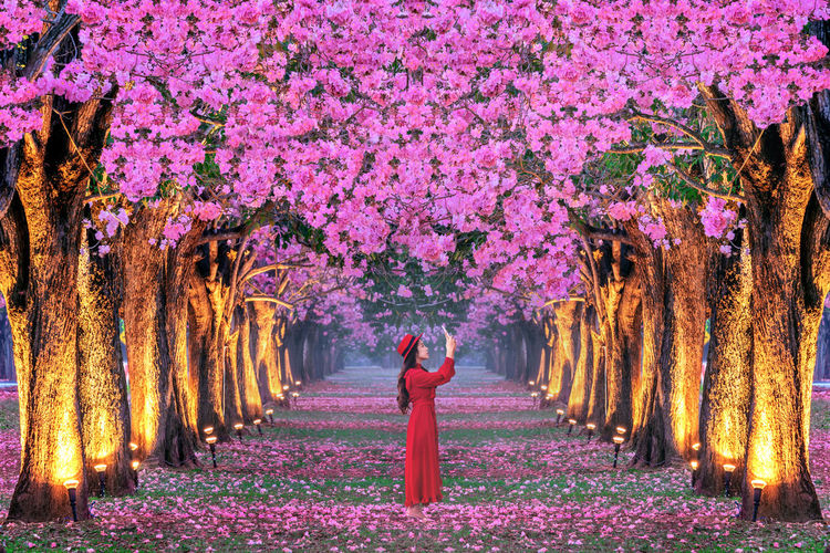 Young woman walking in rows of beautiful pink flowers trees. Plant Tree One Person Growth Flower Beauty In Nature Nature Pink Color Flowering Plant Real People Women Freshness Fragility Standing Springtime Tree Trunk Trunk Lifestyles Park - Man Made Space Outdoors Purple Change Human Arm