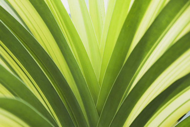 Backgrounds Beauty In Nature Botany Close-up Development Frond Green Color Growth Leaf Natural Pattern Nature No People Outdoors Palm Leaf Palm Tree Plant Plant Part Satisfaction Tree Tropical Climate