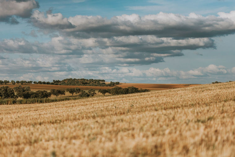 Alentejo Portugal Landscape Landscape_Collection Landscape_photography Cloud - Sky Sky Environment Land Scenics - Nature Field Beauty In Nature Tranquil Scene Tranquility Nature Agriculture Rural Scene Cereal Plant Day Crop  Horizon Over Land Growth Outdoors No People Cork - Stopper