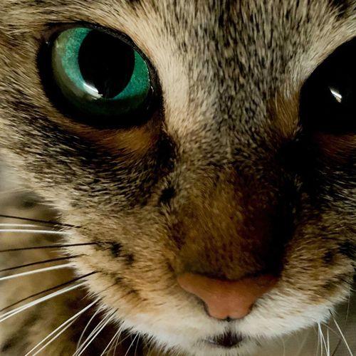 Eyes Cat Eyes