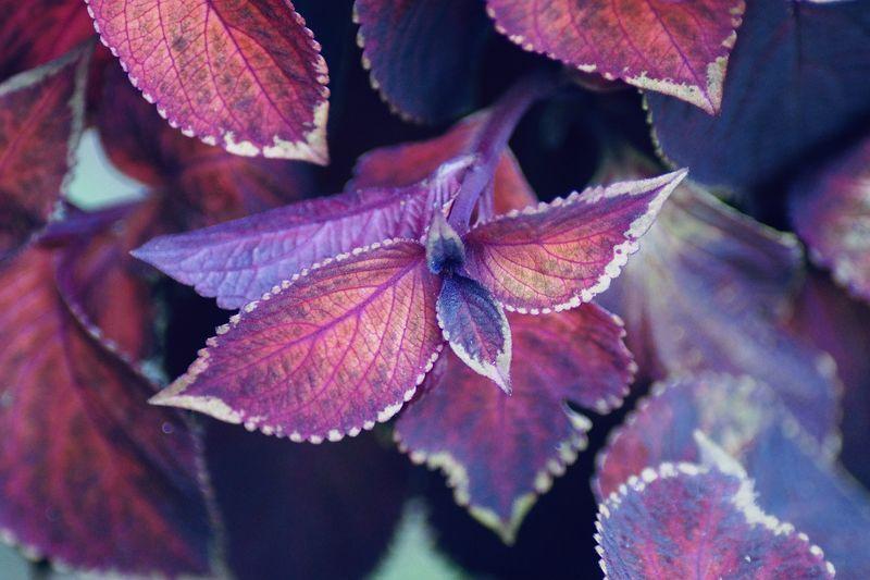 Close-up of purple flower on leaves
