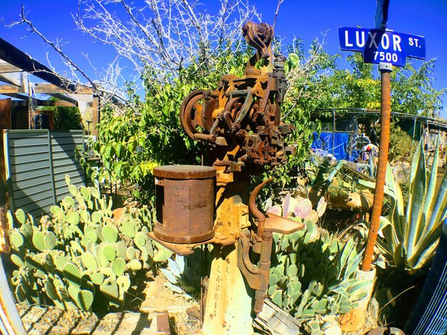 Plant Text Sunlight Outdoors Day Potted Plant No People Growth Flower Cactus Cactus Garden Western Desert Frontier Pioneer Water Pump Joshua Tree Nature Freshness Building Exterior Sky Close-up