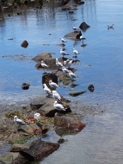 Flock of gulls Water Nature High Angle View No People Beauty In Nature Tranquility Group Of Animals Large Group Of Animals Reflection Flock Of Birds Animals In The Wild Outdoors Bird Animal Themes