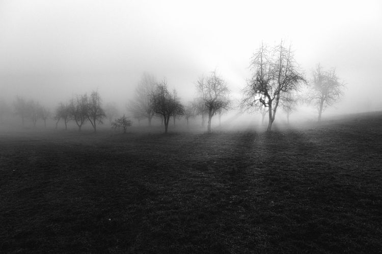 Monti Lessini Beauty In Nature Blackandwhite Day Fog Foggy Hazy  Idyllic Landscape Mist Nature No People Outdoors Scenics Sky Tranquil Scene Tranquility Tree