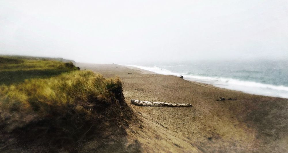 Sea Beach Nature Landscape Scenics Outdoors Tranquil Scene Sand Clear Sky Tranquility Day Beauty In Nature Sky Water No People Grass Horizon Over Water Wave Nautical Vessel Marin County CA South Beach Beauty In Nature Point Reyes National Seashore Sand Dune