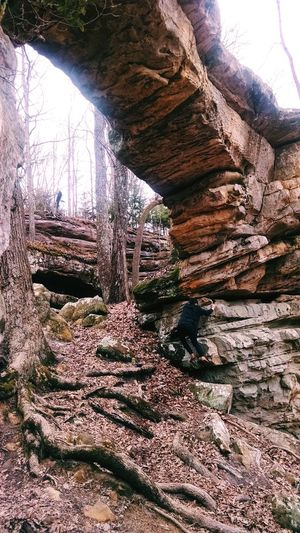 Forest Scenics Tree Tranquility Tranquil Scene Nature Beauty In Nature Non-urban Scene Rock Formation Travel Destinations Day Outdoors Growth Remote WoodLand Green Color Non Urban Scene Cliff Bridge Climbing College Girl  Hiking Explore Nature Explore Tennessee