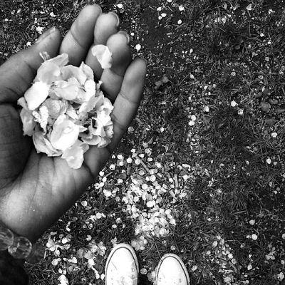 5-2-14 Searchingforspring Flower WnB Beccakempphotos springgram @instagram