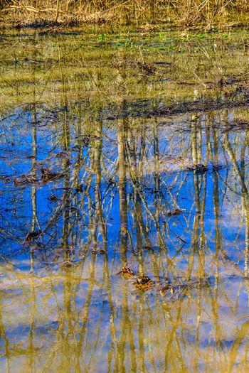 Full frame shot of plants in lake