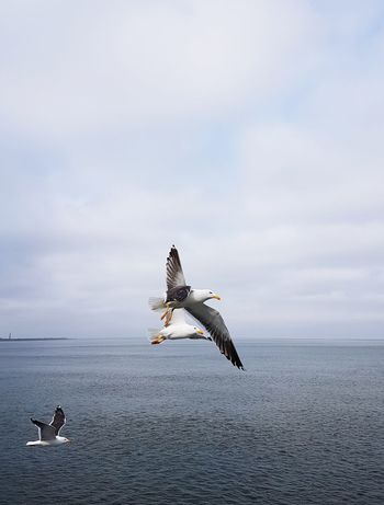 Gulls Clouds And Sky Air Outside EyeEm Selects Flying Sea Life Sea Spread Wings Water Sea Bird
