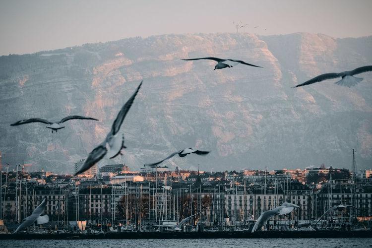 Seagulls flying over sea against sky. geneve, genf, geneva, switzerland.