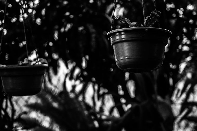 Close-up of potted plants hanging in yard