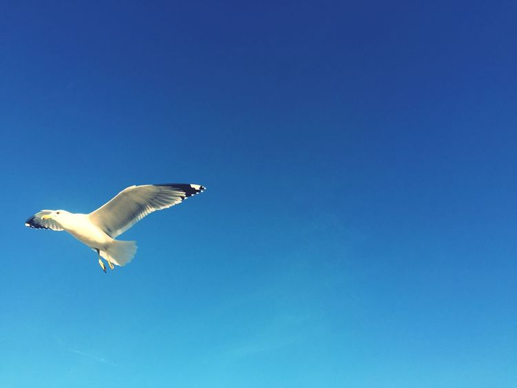 Bird Flying Sky And Clouds Heavenly Amazing View Jesus Saves Jesus Love You