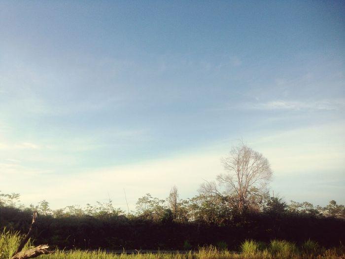 Tree Sky Nature Beauty In Nature Grass Cloud - Sky Outdoors Day Kutai Barat Kalimantan Timur INDONESIA
