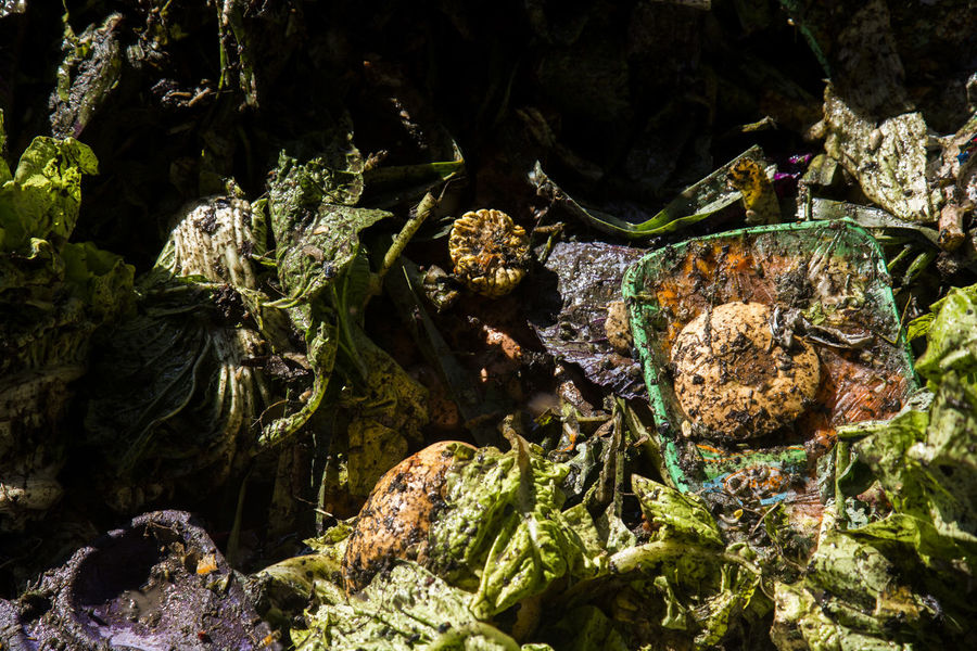 project about food waste Aliment Documentary Photography Food Waste Awareness Food Waste Junk Photojournalism Rubbish Trash Documentary Famulari Food Garbage No People Rotten Waste