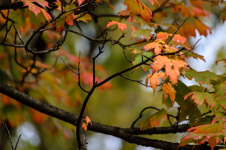 Close-Up Of Autumn Leaves On Twig Against Sky