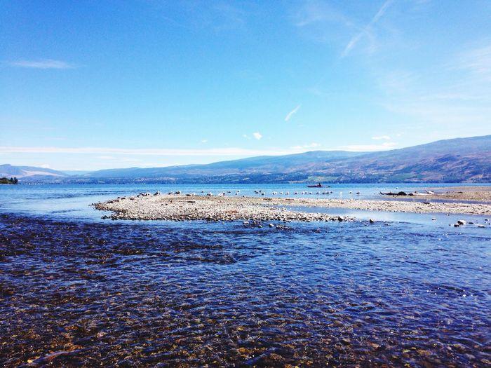 Lake Seagull Water Okanaganlake September Kelowna,BC Canada Kayaker Nature
