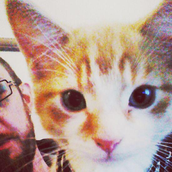 Mörk Cats Of EyeEm Cat Selfie... Cuteness