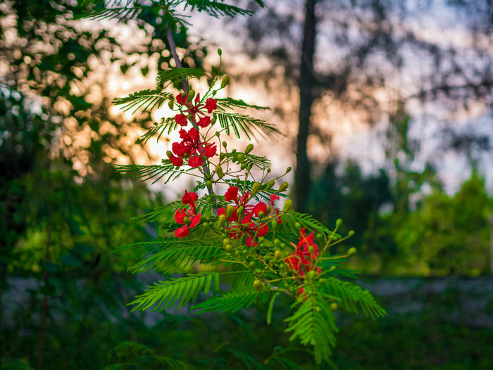 Thai view Plant Growth Green Color Beauty In Nature Nature Focus On Foreground No People Day Tree Red Freshness Close-up Selective Focus Flowering Plant Flower Leaf Plant Part Fragility Outdoors Vulnerability  Coniferous Tree