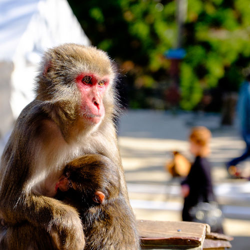 Alertness Animal Family Animal Themes Animals In The Wild Curiosity Focus On Foreground Looking Away Mammal Monkey Oita Oita,japan One Animal Primate Relaxation Relaxing Sitting Takasakiyama Togetherness Wildlife Young Animal Zoology The Portraitist - 2016 EyeEm Awards